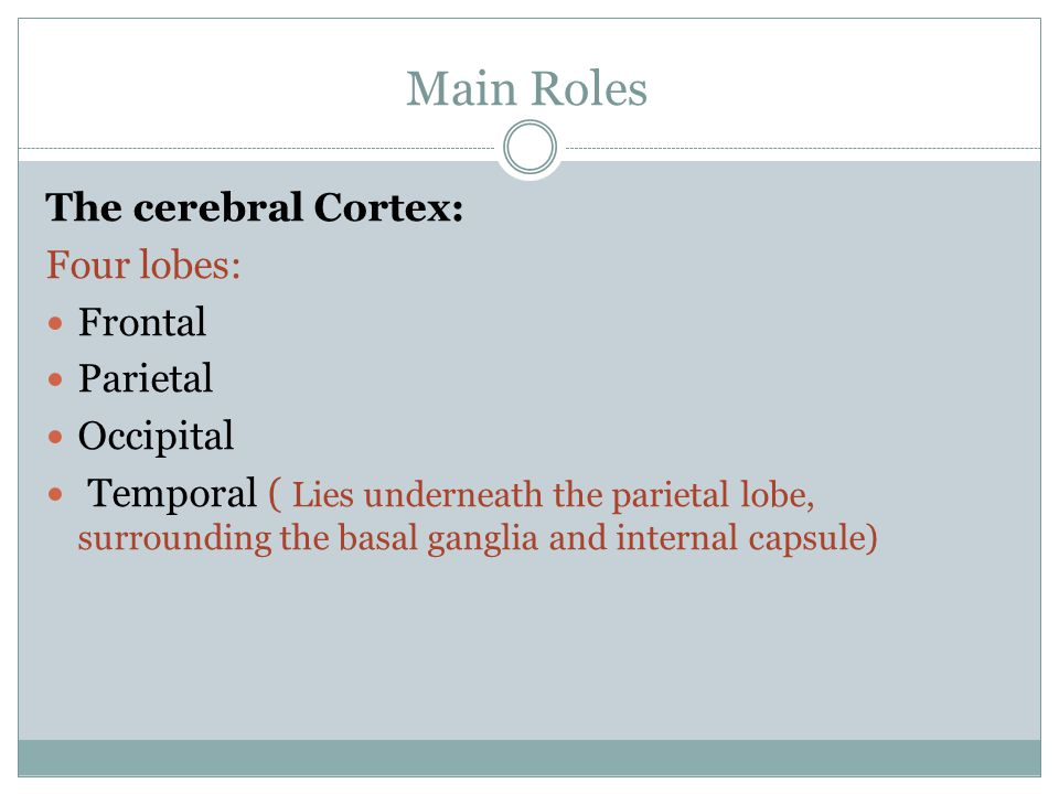 Main Roles The cerebral Cortex: Four lobes: Frontal Parietal Occipital Temporal ( Lies underneath the parietal lobe, surrounding the basal ganglia and internal capsule)