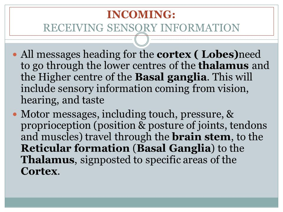 INCOMING: RECEIVING SENSORY INFORMATION All messages heading for the cortex ( Lobes)need to go through the lower centres of the thalamus and the Higher centre of the Basal ganglia.