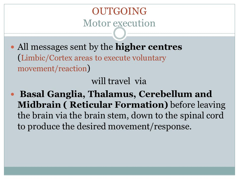 OUTGOING Motor execution All messages sent by the higher centres ( Limbic/Cortex areas to execute voluntary movement/reaction ) will travel via Basal Ganglia, Thalamus, Cerebellum and Midbrain ( Reticular Formation) before leaving the brain via the brain stem, down to the spinal cord to produce the desired movement/response.