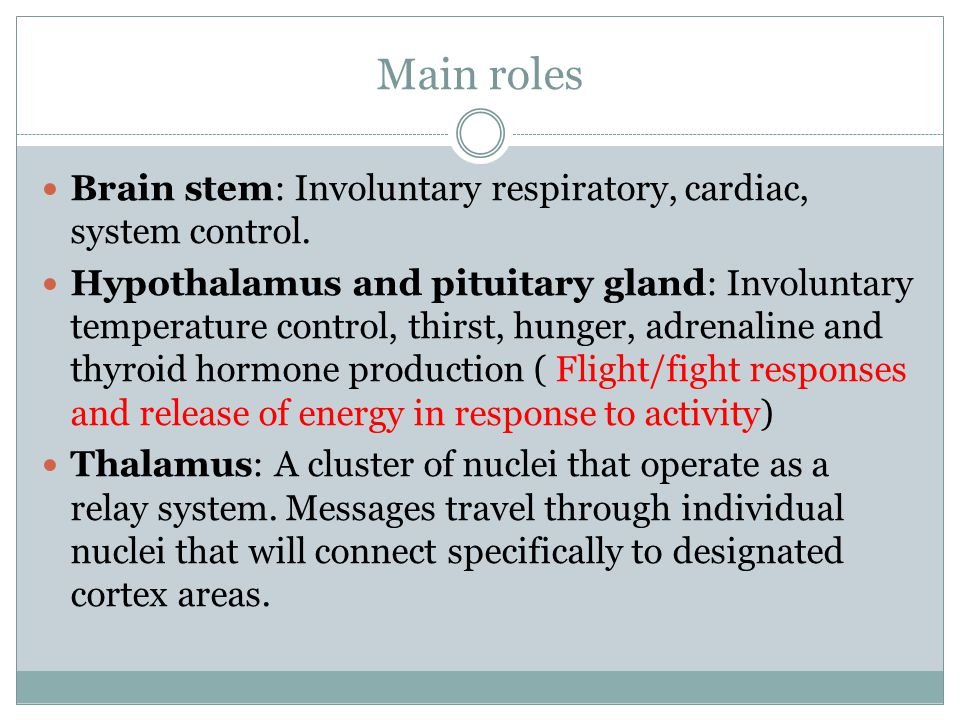 Main roles Brain stem: Involuntary respiratory, cardiac, system control.