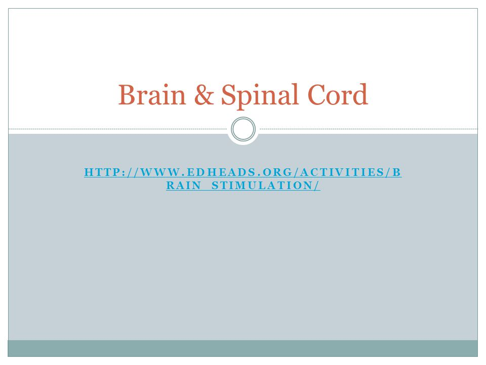 HTTP://WWW.EDHEADS.ORG/ACTIVITIES/B RAIN_STIMULATION/ HTTP://WWW.EDHEADS.ORG/ACTIVITIES/B RAIN_STIMULATION/ Brain & Spinal Cord