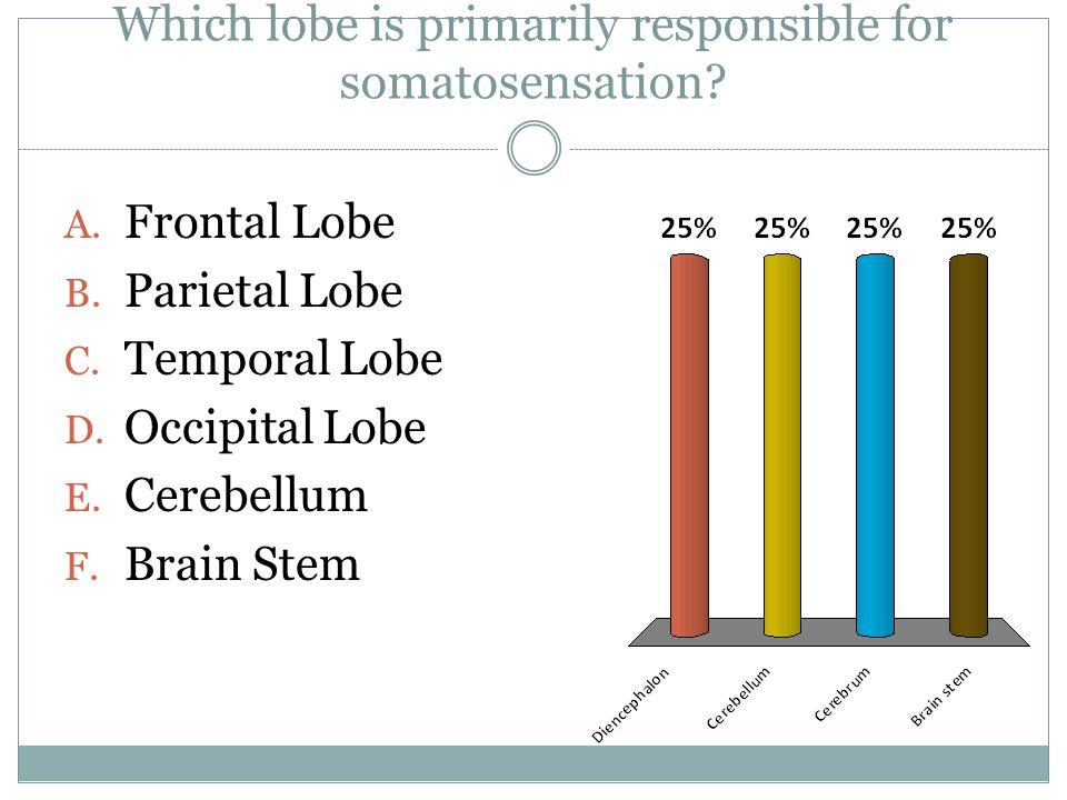 A. Frontal Lobe B. Parietal Lobe C. Temporal Lobe D.