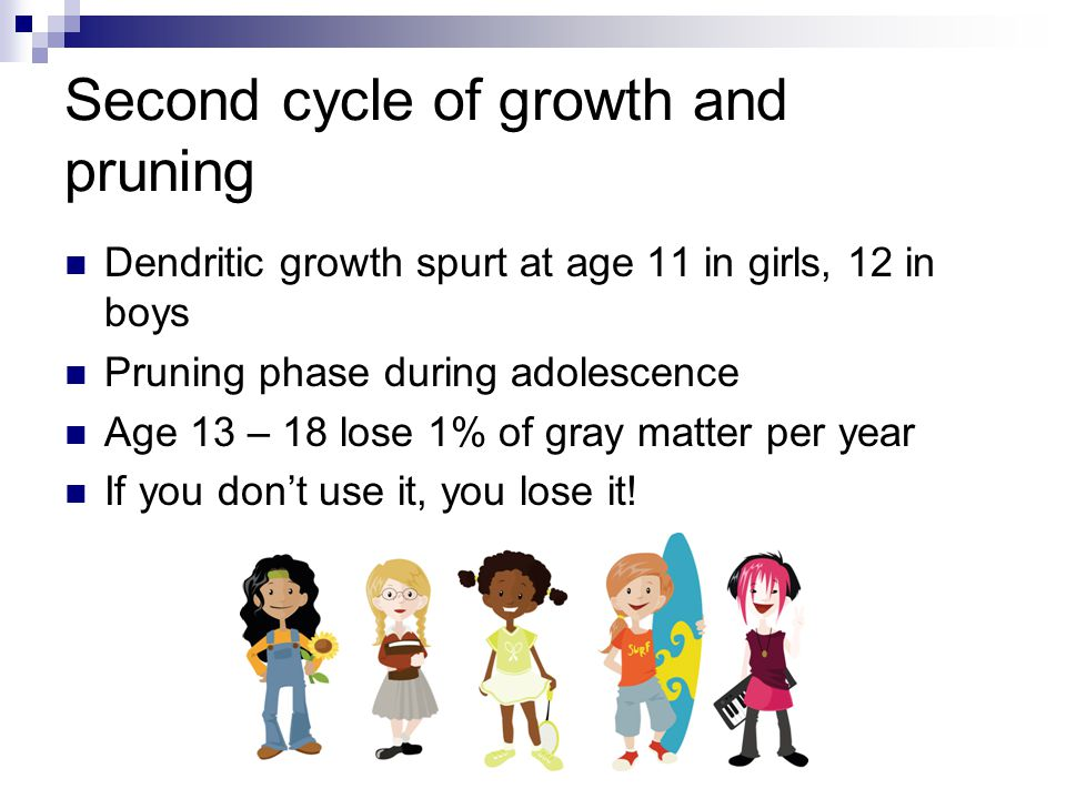 Second cycle of growth and pruning Dendritic growth spurt at age 11 in girls, 12 in boys Pruning phase during adolescence Age 13 – 18 lose 1% of gray matter per year If you don't use it, you lose it!