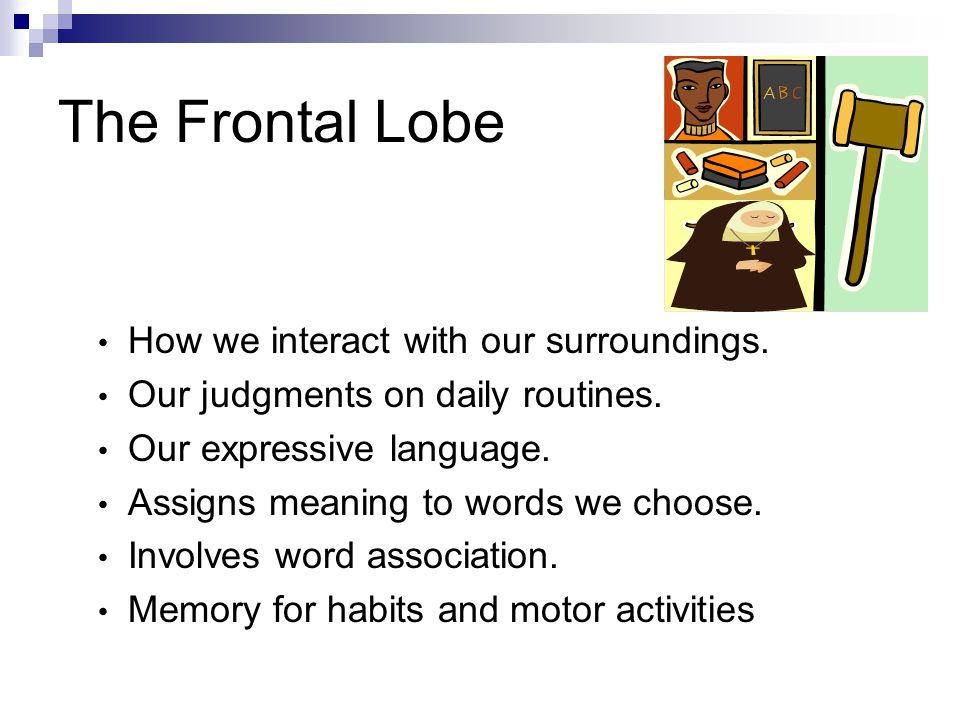 The Parietal Lobe Location for visual attention.Location for touch perception.
