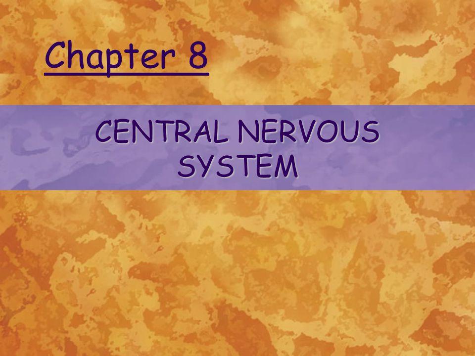 CENTRAL NERVOUS SYSTEM Chapter 8