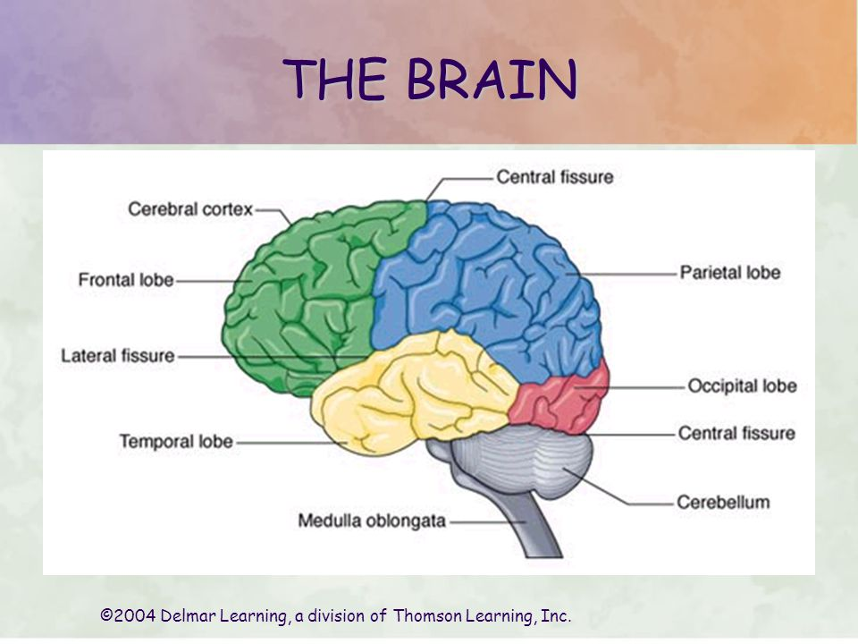 ©2004 Delmar Learning, a division of Thomson Learning, Inc.