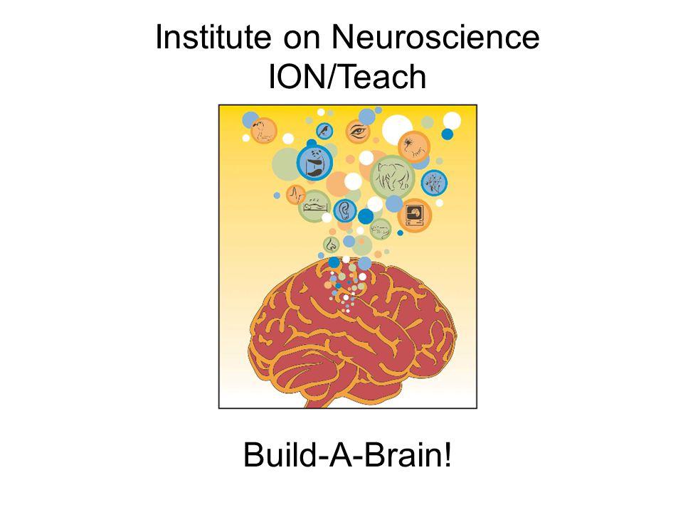 Institute on Neuroscience ION/Teach Build-A-Brain!