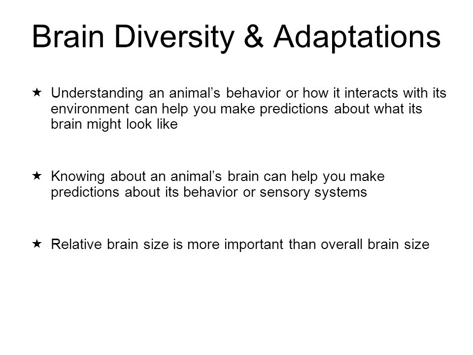 Brain Diversity & Adaptations  Understanding an animal's behavior or how it interacts with its environment can help you make predictions about what its brain might look like  Knowing about an animal's brain can help you make predictions about its behavior or sensory systems  Relative brain size is more important than overall brain size