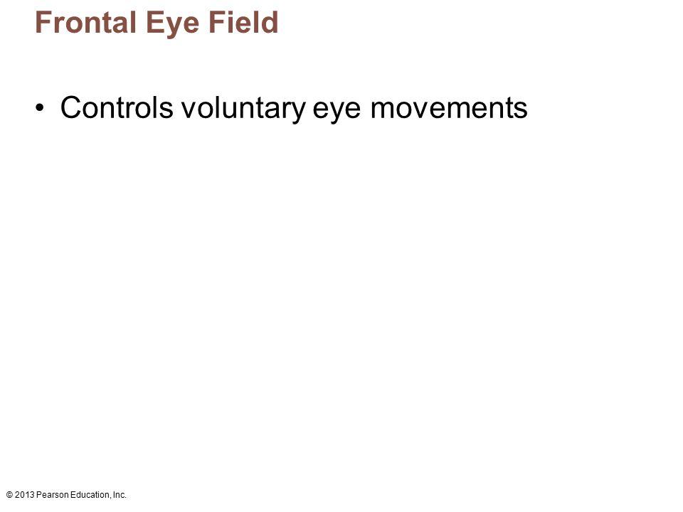 © 2013 Pearson Education, Inc. Frontal Eye Field Controls voluntary eye movements