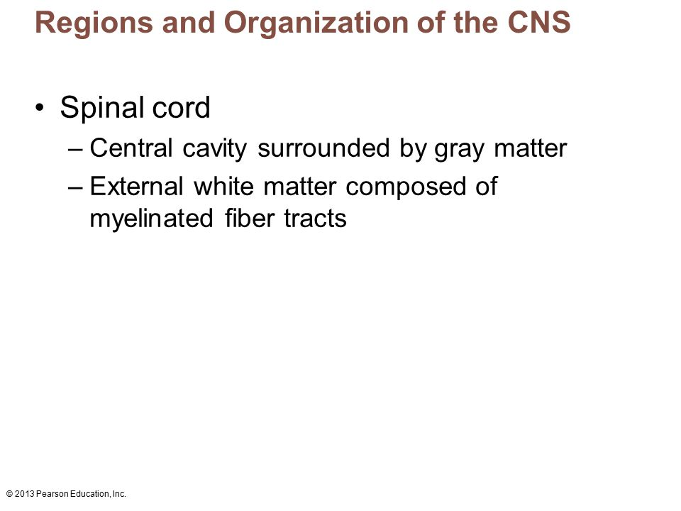 © 2013 Pearson Education, Inc. Regions and Organization of the CNS Spinal cord –Central cavity surrounded by gray matter –External white matter compos