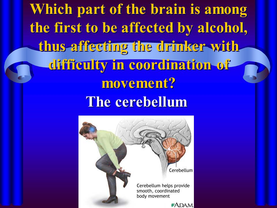 Which part of the brain is among the first to be affected by alcohol, thus affecting the drinker with difficulty in coordination of movement? The cere