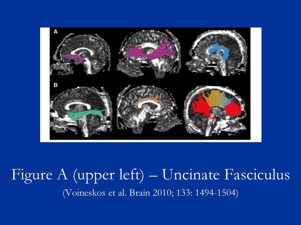 Figure A (upper left) – Uncinate Fasciculus (Voineskos et al. Brain 2010; 133: 1494-1504)