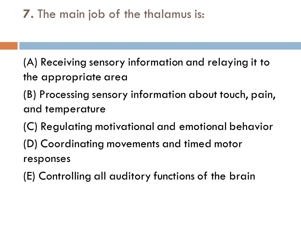 7. The main job of the thalamus is: (A) Receiving sensory information and relaying it to the appropriate area (B) Processing sensory information about