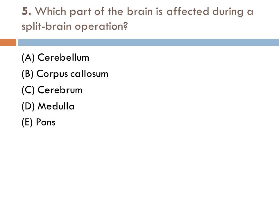 5. Which part of the brain is affected during a split-brain operation? (A) Cerebellum (B) Corpus callosum (C) Cerebrum (D) Medulla (E) Pons