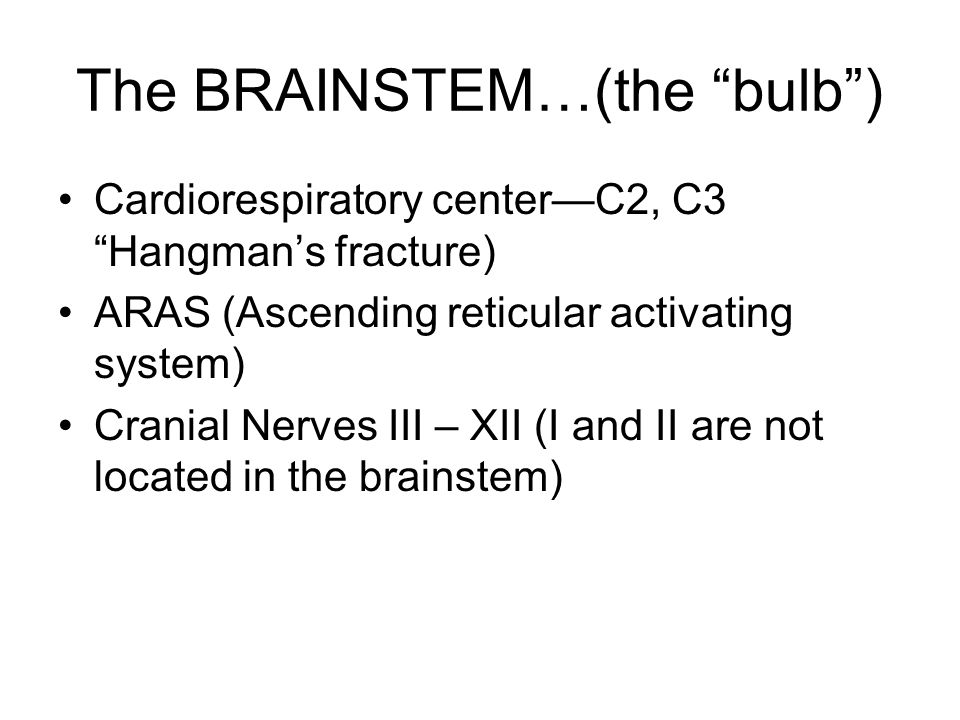 "The BRAINSTEM…(the ""bulb"") Cardiorespiratory center—C2, C3 ""Hangman's fracture) ARAS (Ascending reticular activating system) Cranial Nerves III – XII"