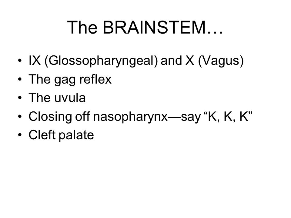 "The BRAINSTEM… IX (Glossopharyngeal) and X (Vagus) The gag reflex The uvula Closing off nasopharynx—say ""K, K, K"" Cleft palate"