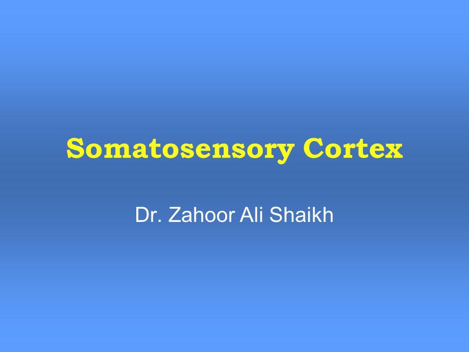 Somatosensory Cortex Dr. Zahoor Ali Shaikh