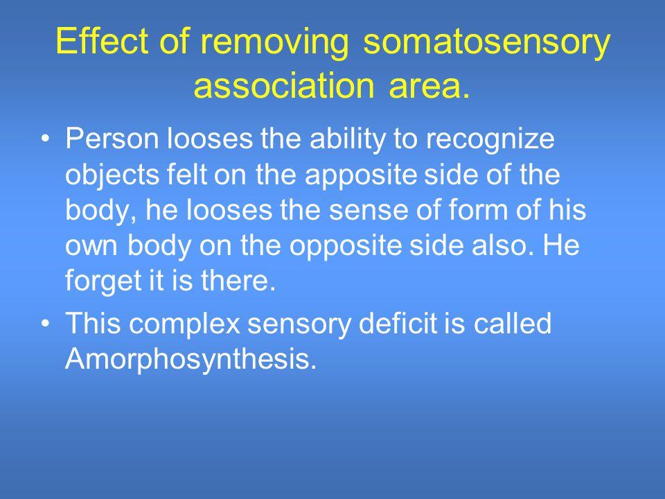 Effect of removing somatosensory association area.