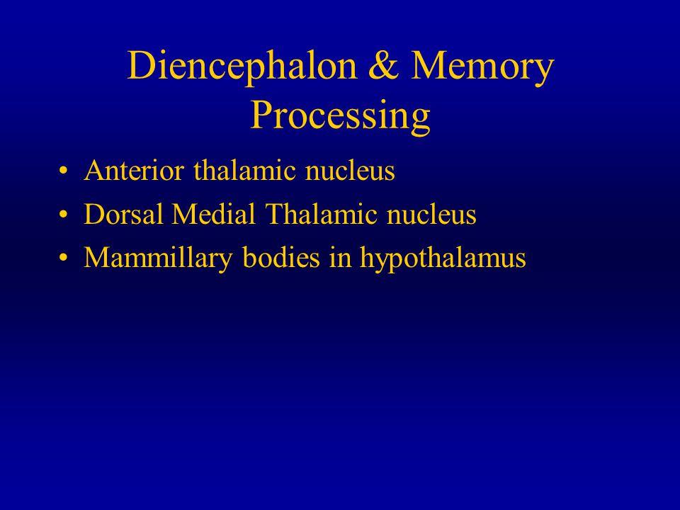 Diencephalon & Memory Processing Anterior thalamic nucleus Dorsal Medial Thalamic nucleus Mammillary bodies in hypothalamus