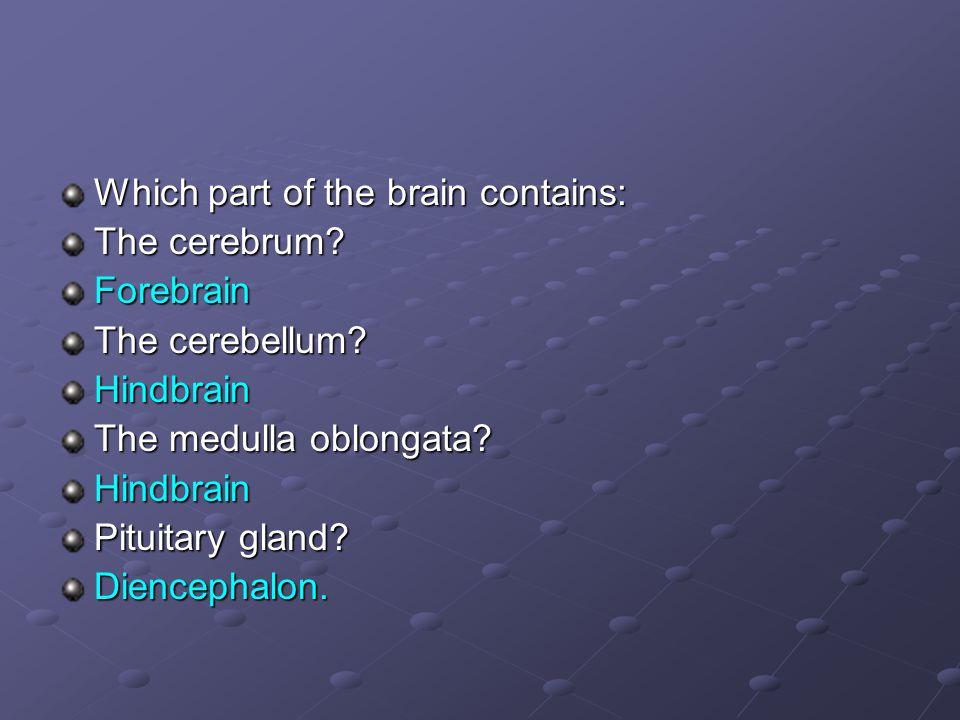 Which part of the brain contains: The cerebrum? Forebrain The cerebellum? Hindbrain The medulla oblongata? Hindbrain Pituitary gland? Diencephalon.