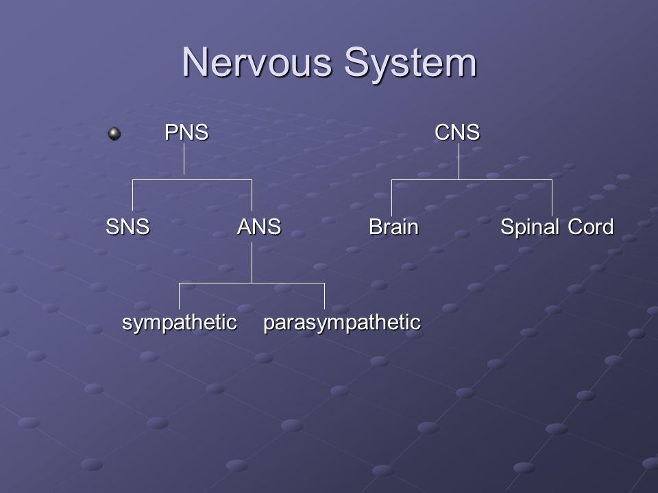 Nervous System PNSCNS PNSCNS SNSANSBrainSpinal Cord sympathetic parasympathetic