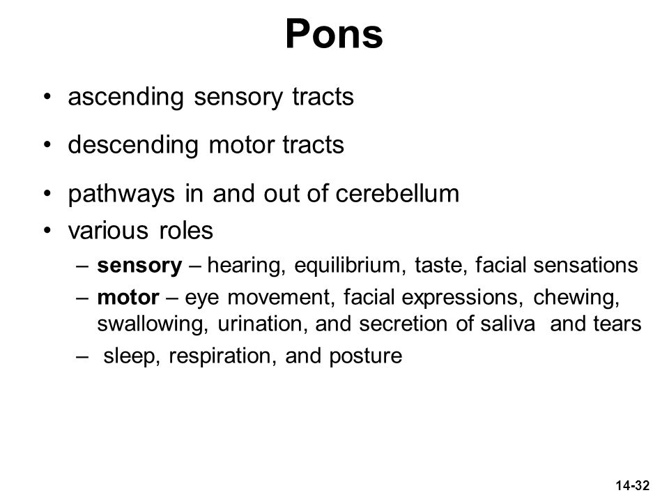 14-32 Pons ascending sensory tracts descending motor tracts pathways in and out of cerebellum various roles –sensory – hearing, equilibrium, taste, fa