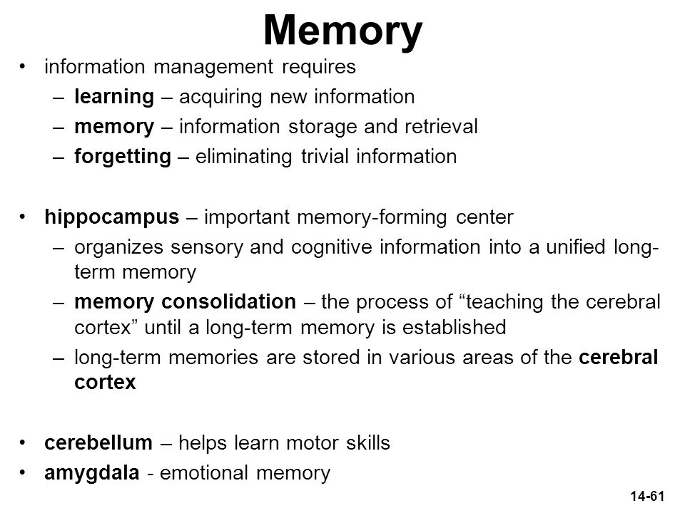 14-61 Memory information management requires –learning – acquiring new information –memory – information storage and retrieval –forgetting – eliminati
