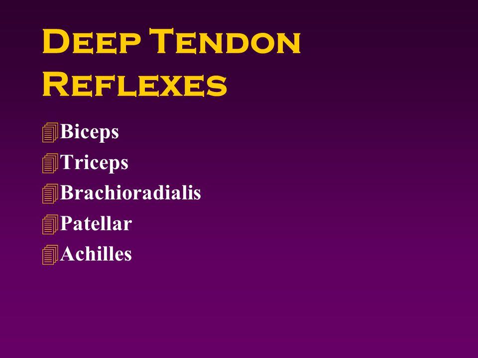 Deep Tendon Reflexes 4Biceps 4Triceps 4Brachioradialis 4Patellar 4Achilles