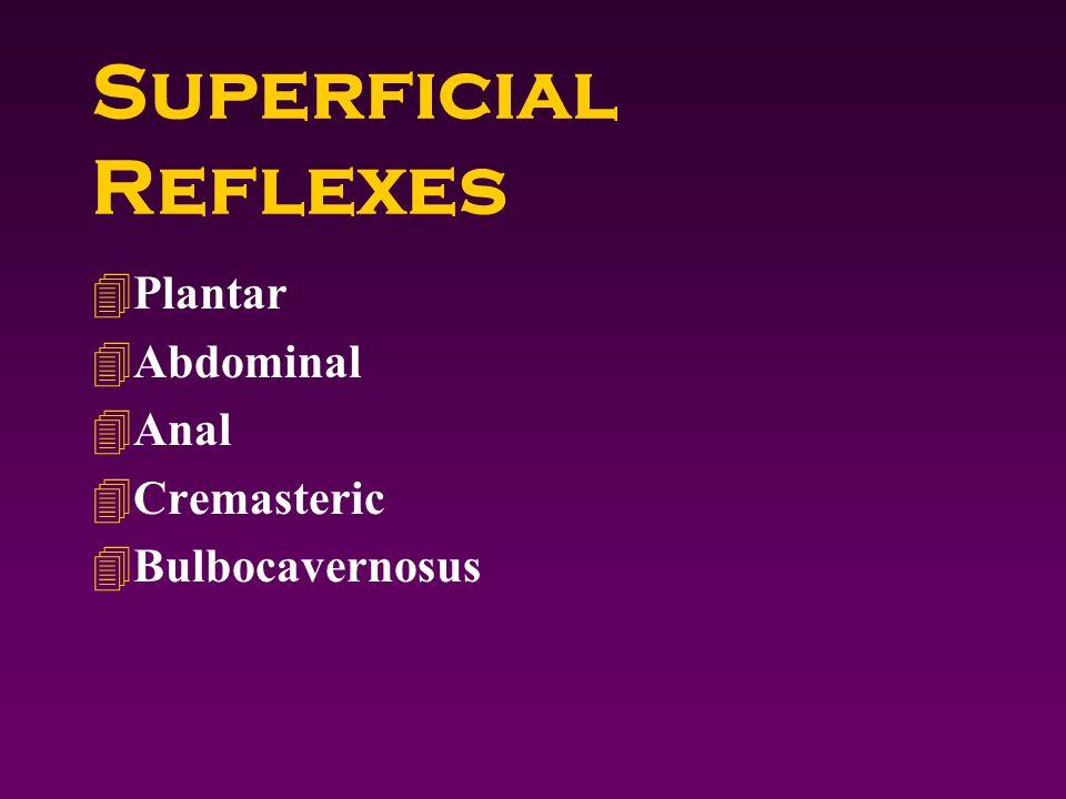 Superficial Reflexes 4Plantar 4Abdominal 4Anal 4Cremasteric 4Bulbocavernosus