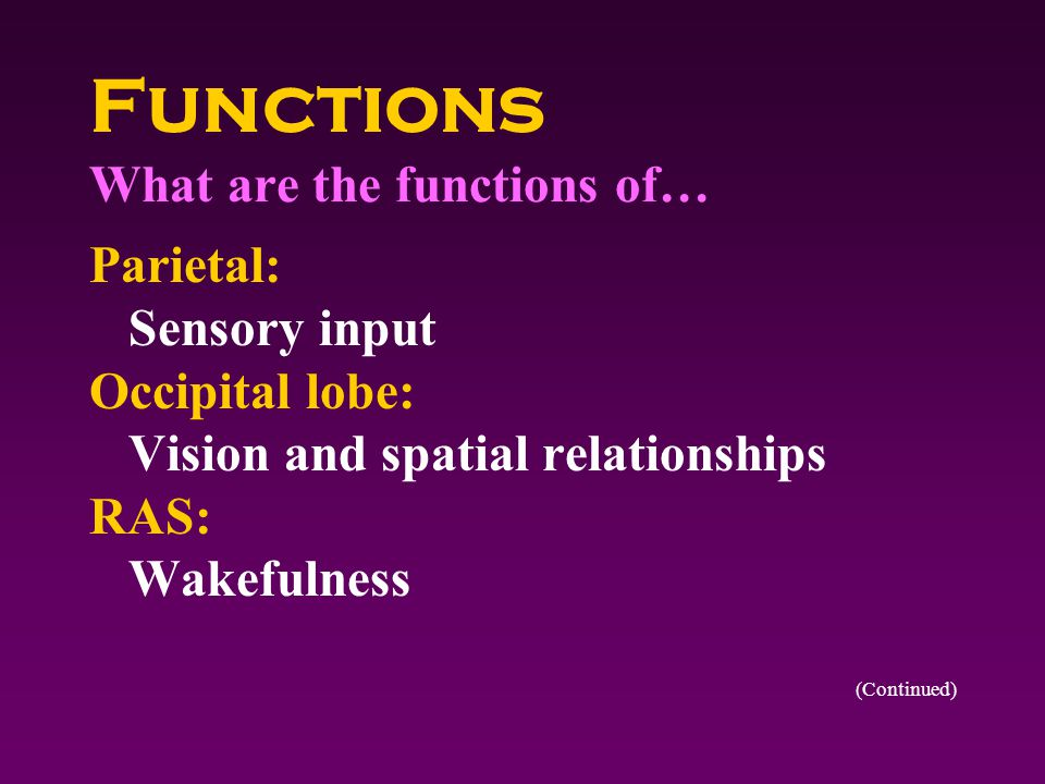 Functions What are the functions of… Thalamus: Clusters multiple sensory stimuli Hypothalamus: Controls autonomic nervous system and pituitary gland Cerebellum: Coordination, equilibrium (Continued)