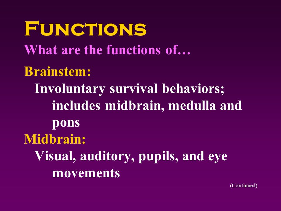 Functions What are the functions of… Brainstem: Involuntary survival behaviors; includes midbrain, medulla and pons Midbrain: Visual, auditory, pupils, and eye movements (Continued)