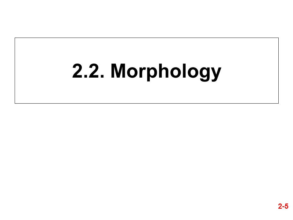 2.2. Morphology 2-5