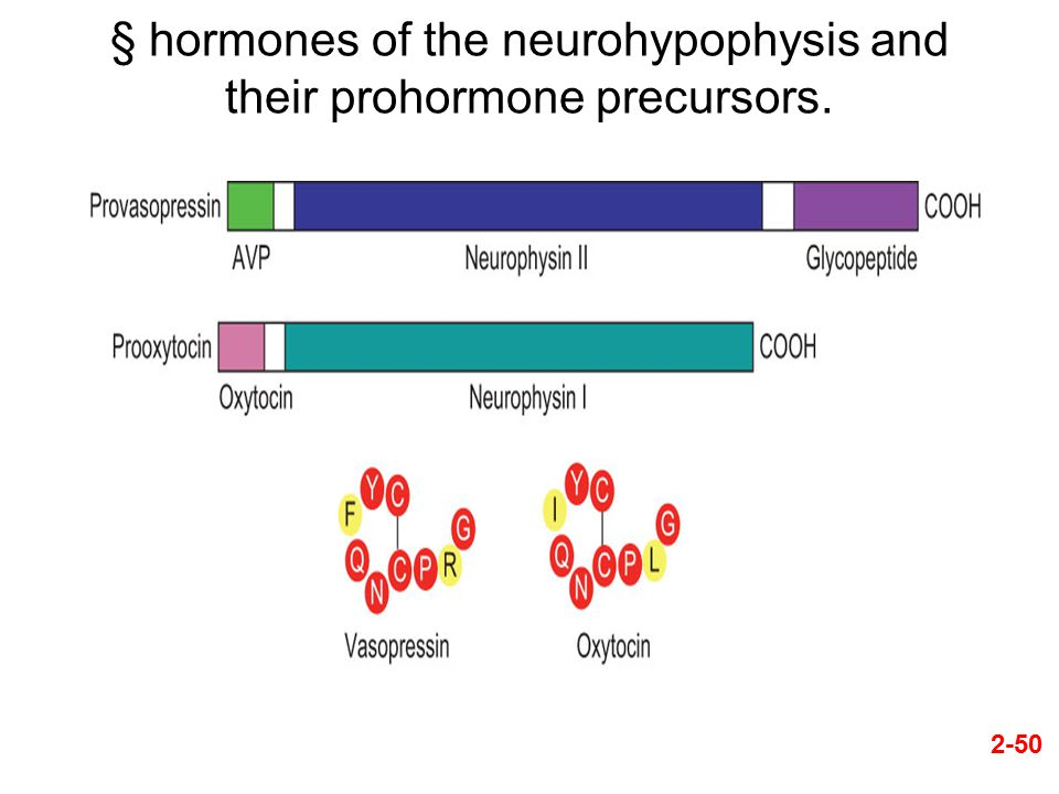 2-50 § hormones of the neurohypophysis and their prohormone precursors.