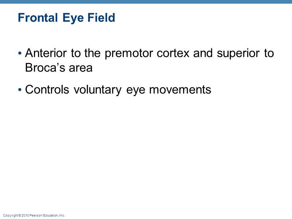 Copyright © 2010 Pearson Education, Inc. Frontal Eye Field Anterior to the premotor cortex and superior to Broca's area Controls voluntary eye movemen