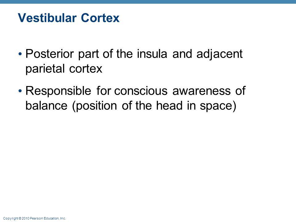 Copyright © 2010 Pearson Education, Inc. Vestibular Cortex Posterior part of the insula and adjacent parietal cortex Responsible for conscious awarene