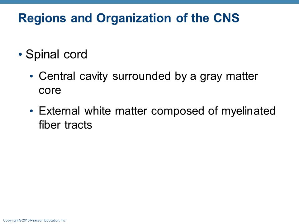 Copyright © 2010 Pearson Education, Inc. Regions and Organization of the CNS Spinal cord Central cavity surrounded by a gray matter core External whit