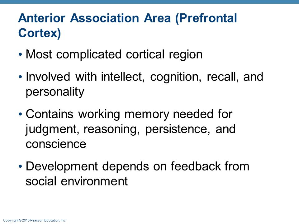 Copyright © 2010 Pearson Education, Inc. Anterior Association Area (Prefrontal Cortex) Most complicated cortical region Involved with intellect, cogni