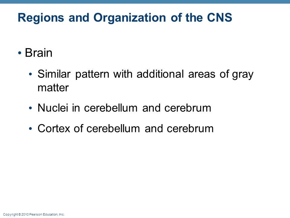 Copyright © 2010 Pearson Education, Inc. Regions and Organization of the CNS Brain Similar pattern with additional areas of gray matter Nuclei in cere