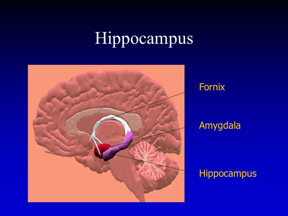 Hippocampus Fornix Amygdala Hippocampus