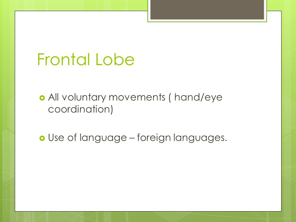 Frontal Lobe  All voluntary movements ( hand/eye coordination)  Use of language – foreign languages.
