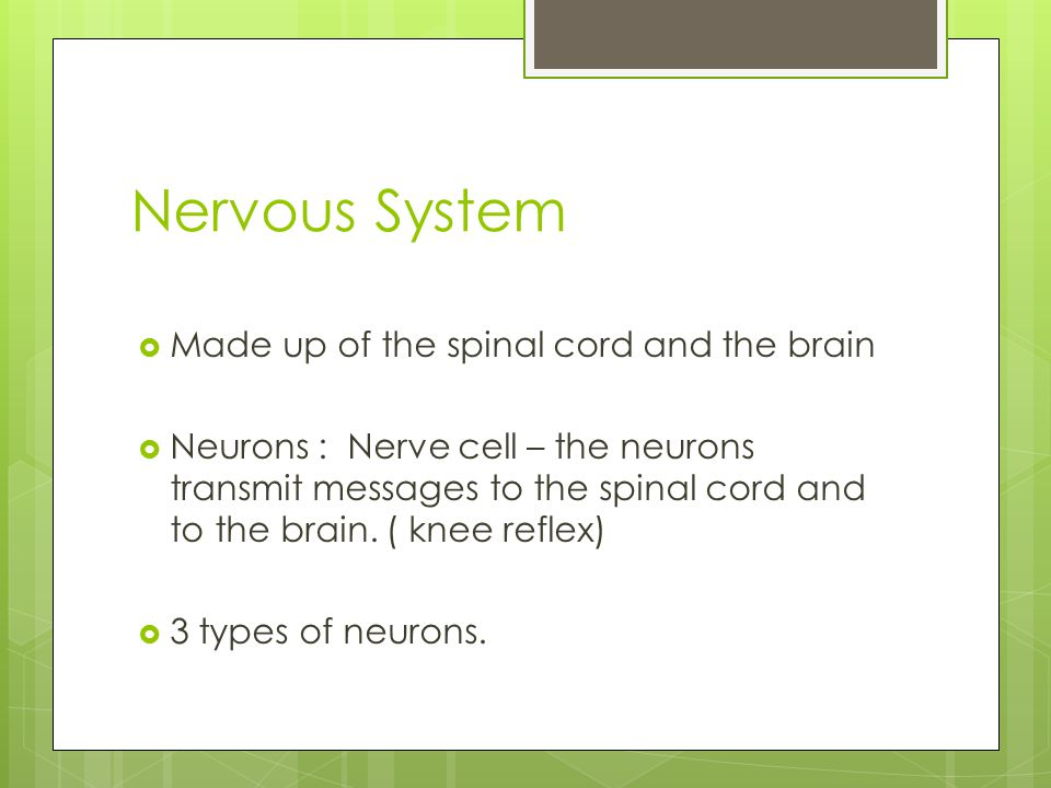 Nervous System  Made up of the spinal cord and the brain  Neurons : Nerve cell – the neurons transmit messages to the spinal cord and to the brain.