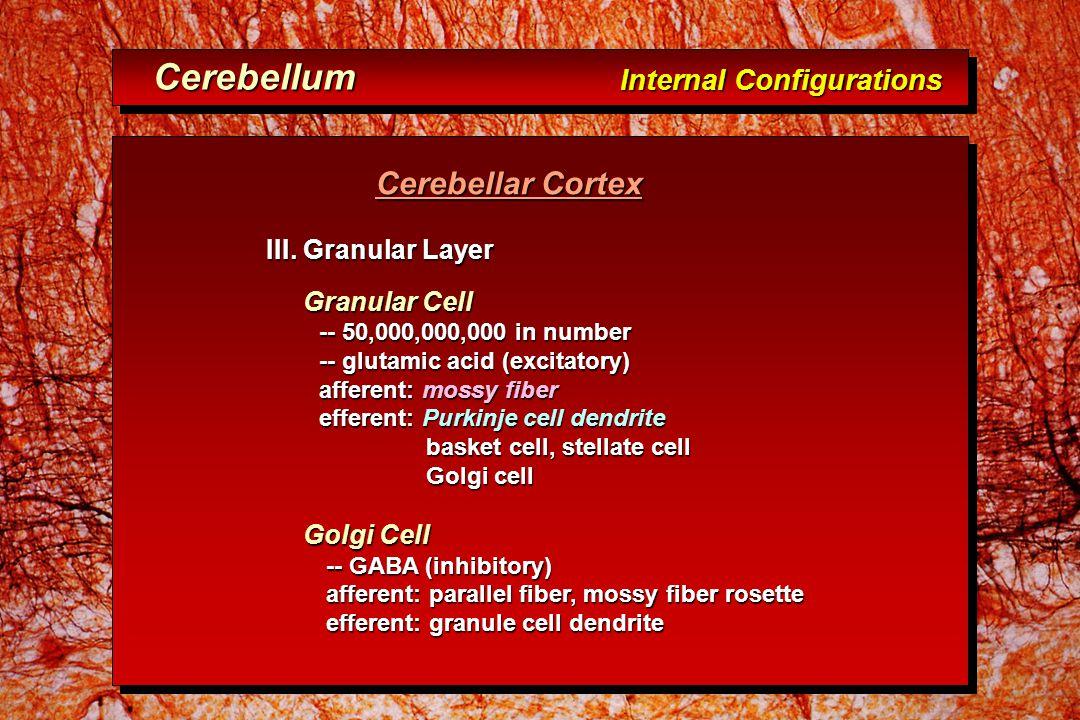 Cerebellar Cortex Cerebellar Cortex III.