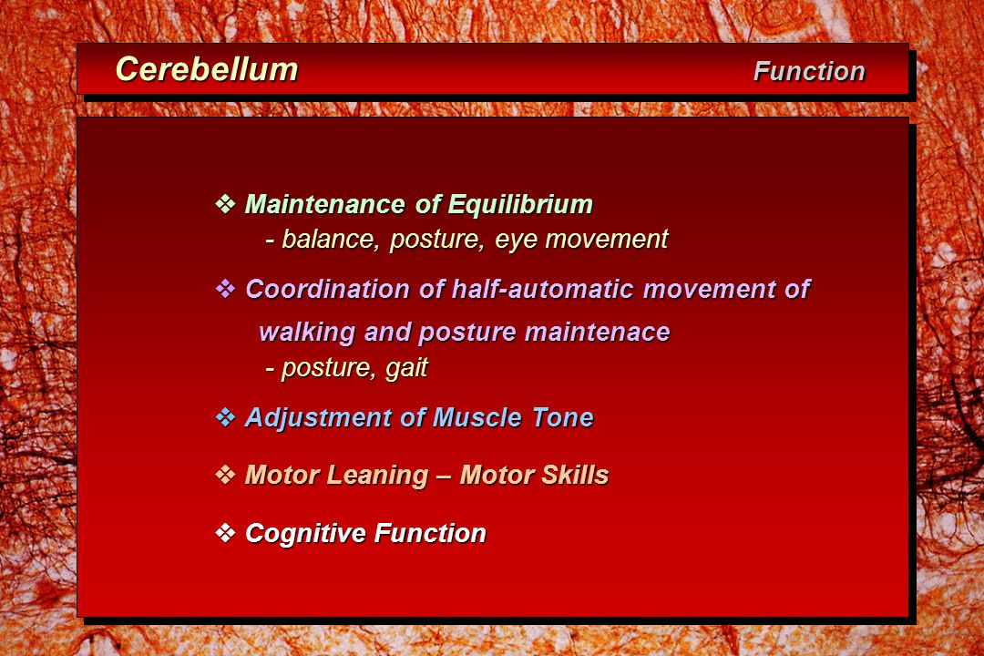 Cerebellum Function Cerebellum Function  Maintenance of Equilibrium - balance, posture, eye movement - balance, posture, eye movement  Coordination of half-automatic movement of walking and posture maintenace walking and posture maintenace - posture, gait - posture, gait  Adjustment of Muscle Tone  Motor Leaning – Motor Skills  Cognitive Function