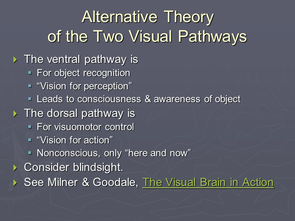 Alternative Theory of the Two Visual Pathways  The ventral pathway is  For object recognition  Vision for perception  Leads to consciousness & awareness of object  The dorsal pathway is  For visuomotor control  Vision for action  Nonconscious, only here and now  Consider blindsight.