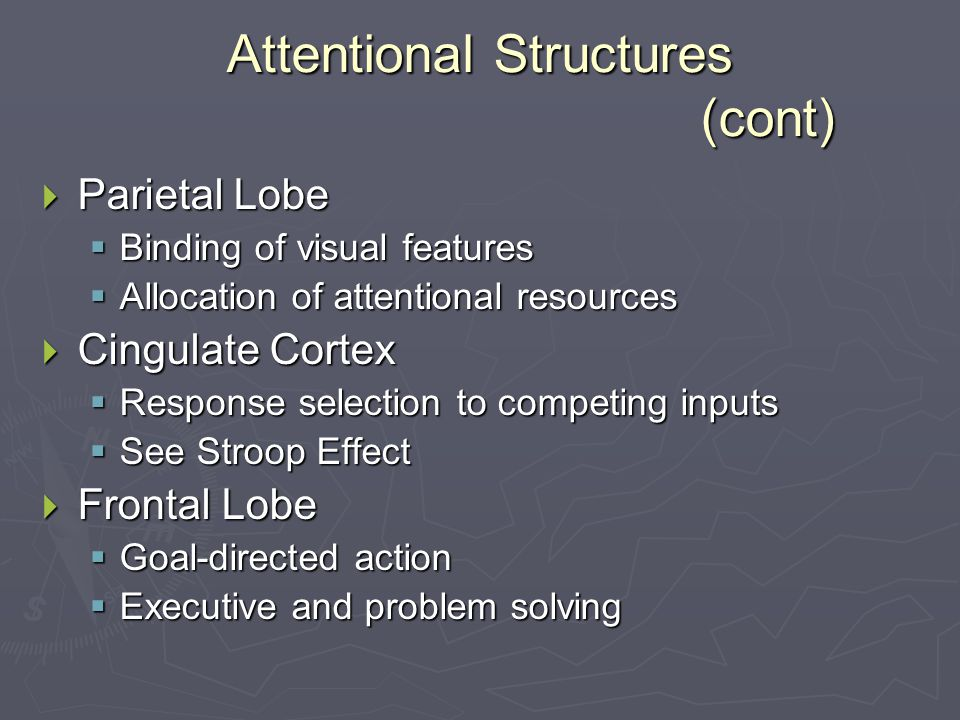 Attentional Structures (cont)  Parietal Lobe  Binding of visual features  Allocation of attentional resources  Cingulate Cortex  Response selection to competing inputs  See Stroop Effect  Frontal Lobe  Goal-directed action  Executive and problem solving