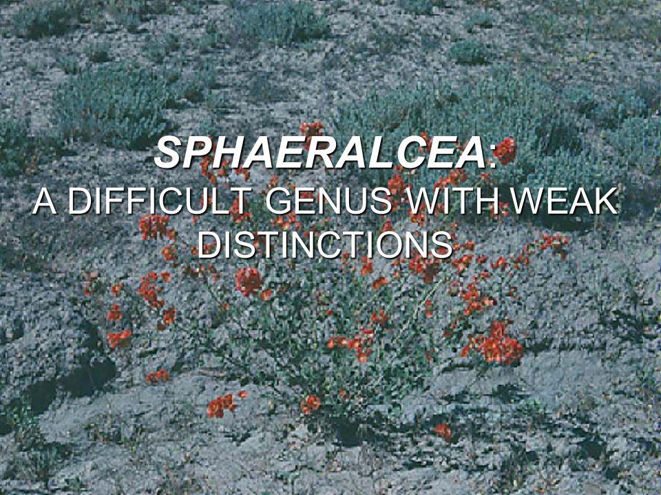 SPHAERALCEA: A DIFFICULT GENUS WITH WEAK DISTINCTIONS