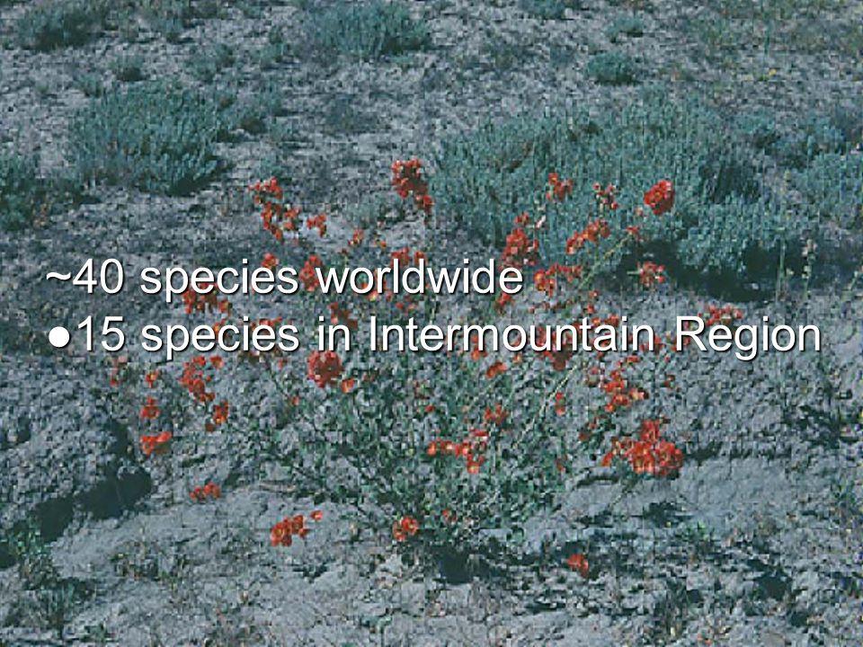 ~40 species worldwide ●15 species in Intermountain Region