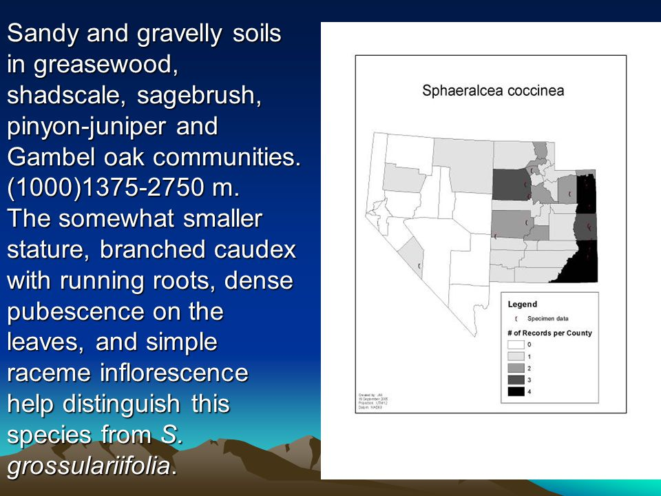 Sandy and gravelly soils in greasewood, shadscale, sagebrush, pinyon-juniper and Gambel oak communities. (1000)1375-2750 m. The somewhat smaller statu