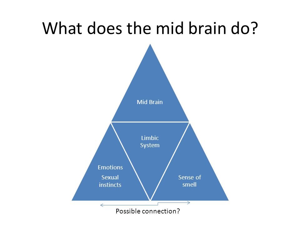 What does the mid brain do.