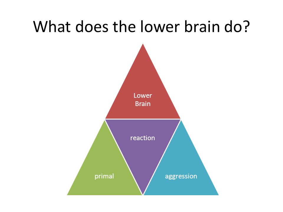 What does the lower brain do? Lower Brain primal reaction aggression